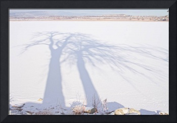 Tree Shadow Puppets