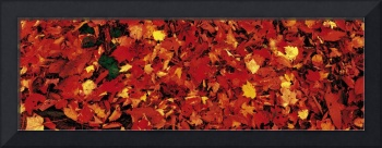 Autumn Leaves Great Smoky Mountains National Park