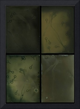 4 glass plate ambrotypes