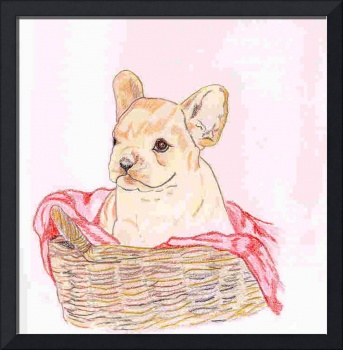 French Bull Dog, Love in a Basket
