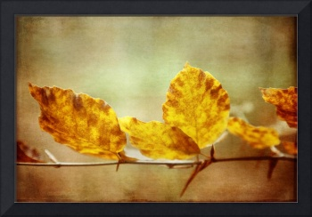Autumn Leaves with Textures and Grunge Effect
