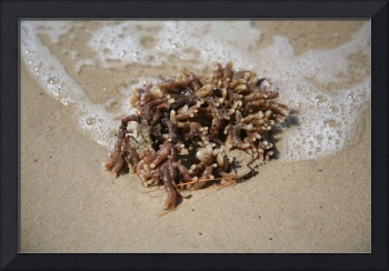 Sea Life Washing Ashore 4