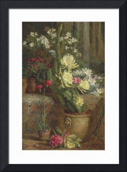Annie Feray Mutrie (1826-1893) The flowering cactu
