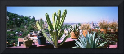 Potted plants on terrace of a building with city