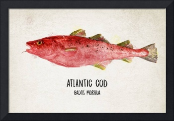 Cod in Red