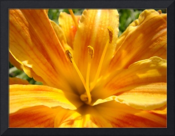 LILIES ART Golden Orange Lily Flower Art Baslee