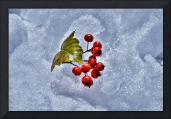 Mountain Ash on Ice (HDR)