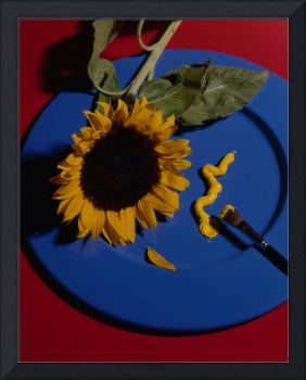Sunflower on blue plate