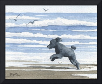 Black Poodle at the Beach