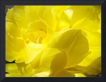 YELLOW TULIP FLOWER Art Print TULIPS Floral