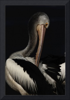 Pelican Model Behaviour I