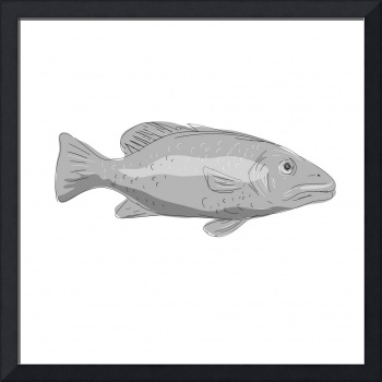 Schoolmaster Snapper Fish Drawing
