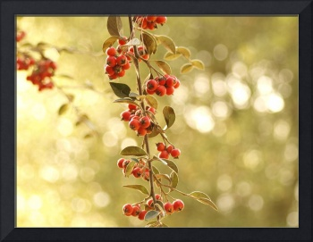 Red Blossoming Berries Growing from Trees