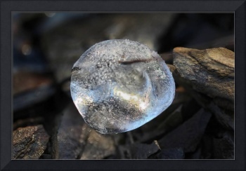 Nature's Crystal Ball