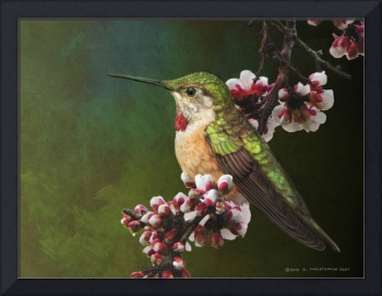 female hummer portrait
