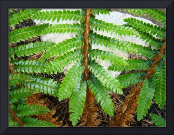 Canyon Forest Meadow Green Fern Branches