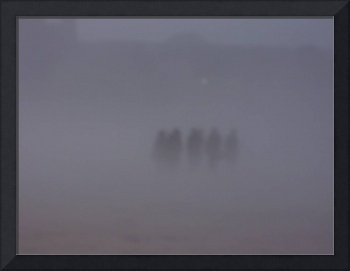 Apparitions in the mist
