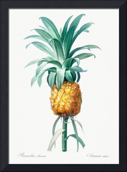 Vintage Botanical Pineapple