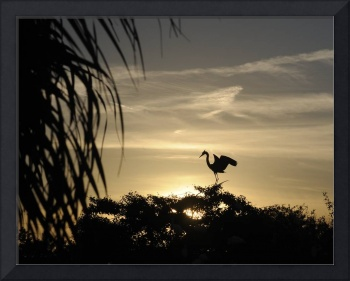 Louisiana  Blue Heron Sunset