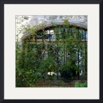 Vine Covered Window in Jbeil 0091 by Jacque Alameddine