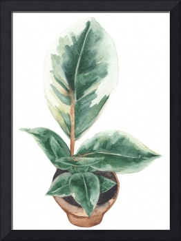Potted Variegated Plant