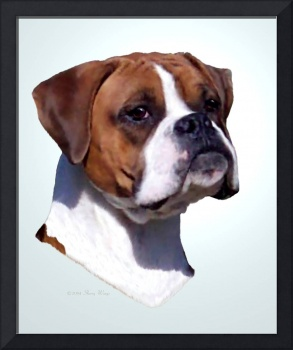 DAZZLE, Boxer dog with natural ears