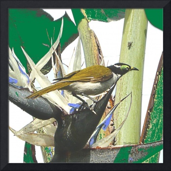 bird-honeyeater-4