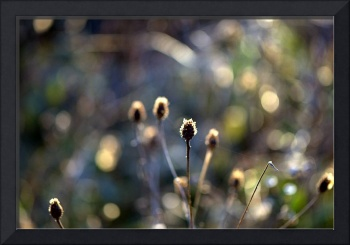 Seedheads in winter sun