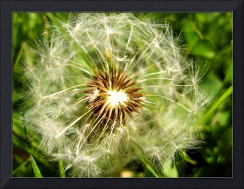 Is It A Weed Or A Flower