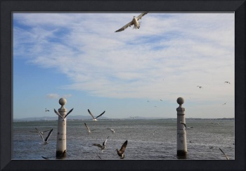The view of the seagulls and sea