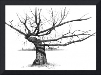 Tree with Gnarled, Twisted Bare Branches, Pencil