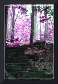 Enchanted Stairway in the forest