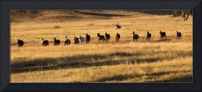 Wrangling Horses in the Golden Grass of Early Morn