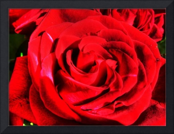 Red rose close up stylized