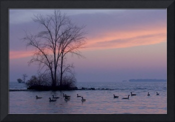Photography For Sale - Geese At Dusk