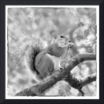 Squirrel in a Tree - Black and White