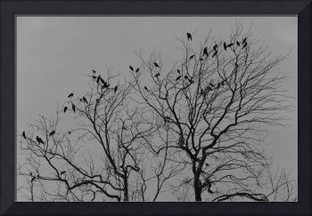 birds on the tree