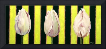 Tulips on Stripes