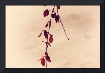 Simple Branch