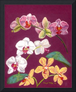 Orchids_9Blossoms