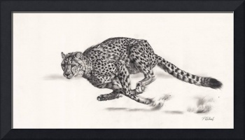 Hell For Leather cheetah drawing