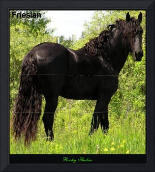 Friesian Stallion Roek