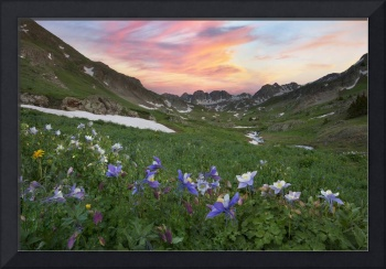 Colorado Wildflower Images - Columbine at American