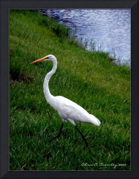 Great Egret Promenade