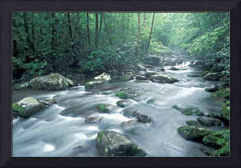 Smoky Mountains - Porters Creek, Great Smoky Mount