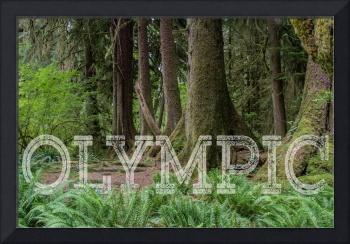 Olympic National Park's Hoh Rainforest