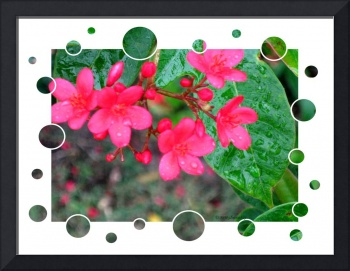 Flowers After  the Rain  Card