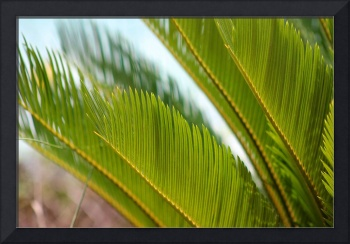 Palm Fronds 2016
