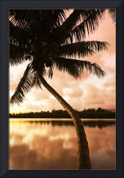 Hawaii, Oahu, Kualoa Ranch, Palm Tree At Sunrise,