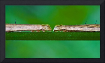Two Big Caterpillars in a Green Nature Landscape